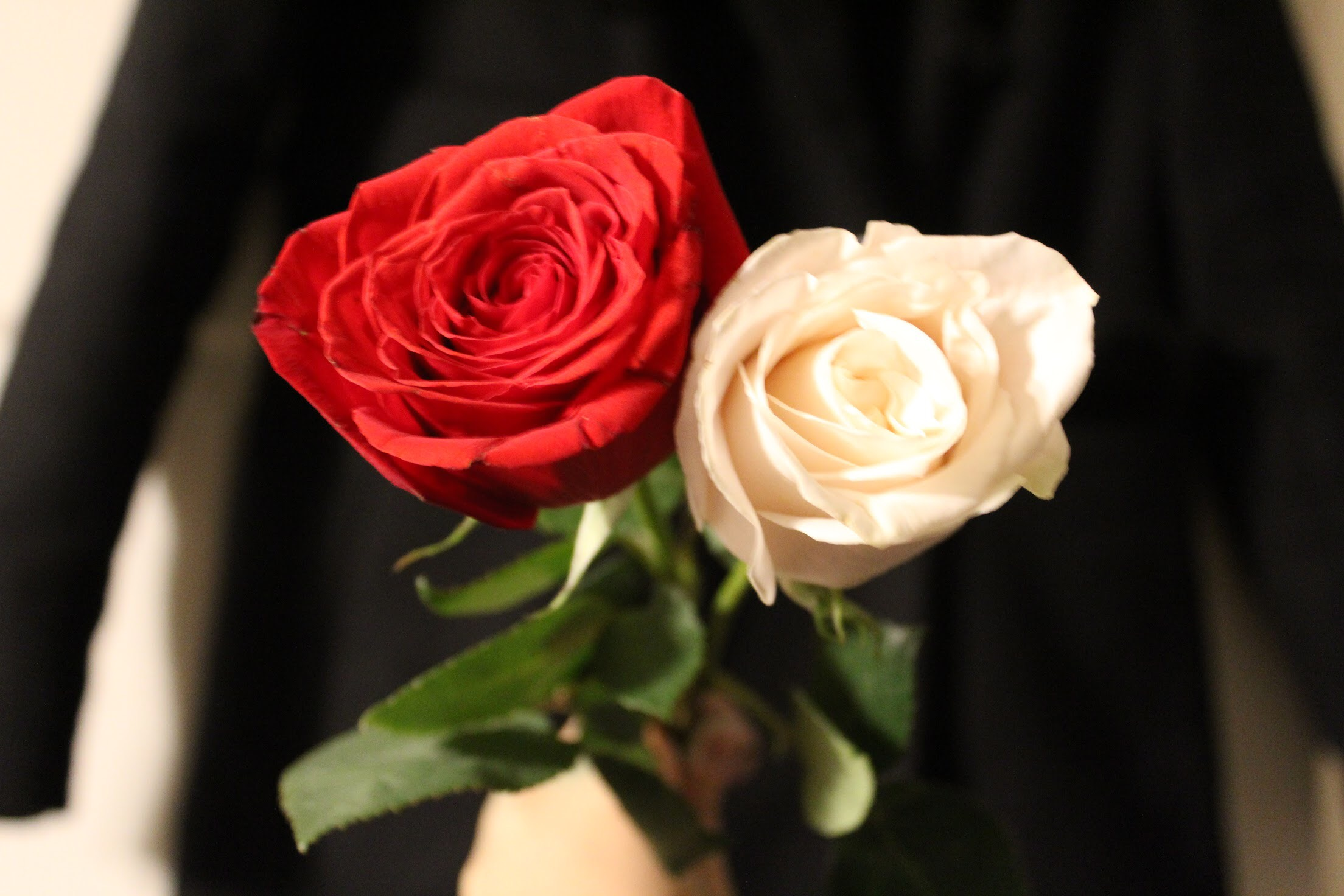 Project 4 Red Rose And White Rose Sijiascarlett
