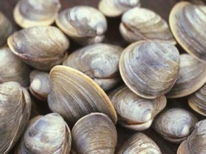 Project 5: Marker-assisted selection of hard clams for resistance towards QPX