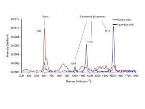 aureoumbra-spectr