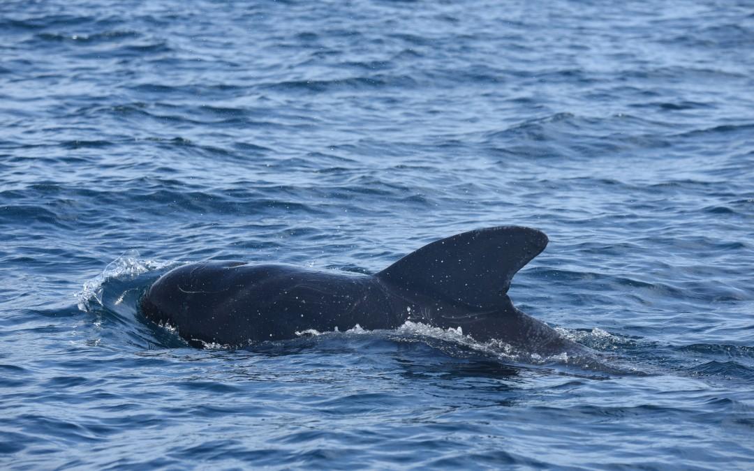 MS Student Julia Stepanuk Heads to North Carolina to Tag Pilot Whales