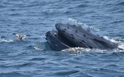 Marine mammal madness in the New York Bight!