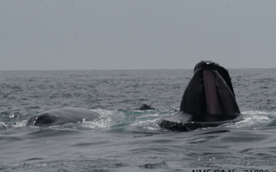 An epic start to our 2020 humpback whale field season!
