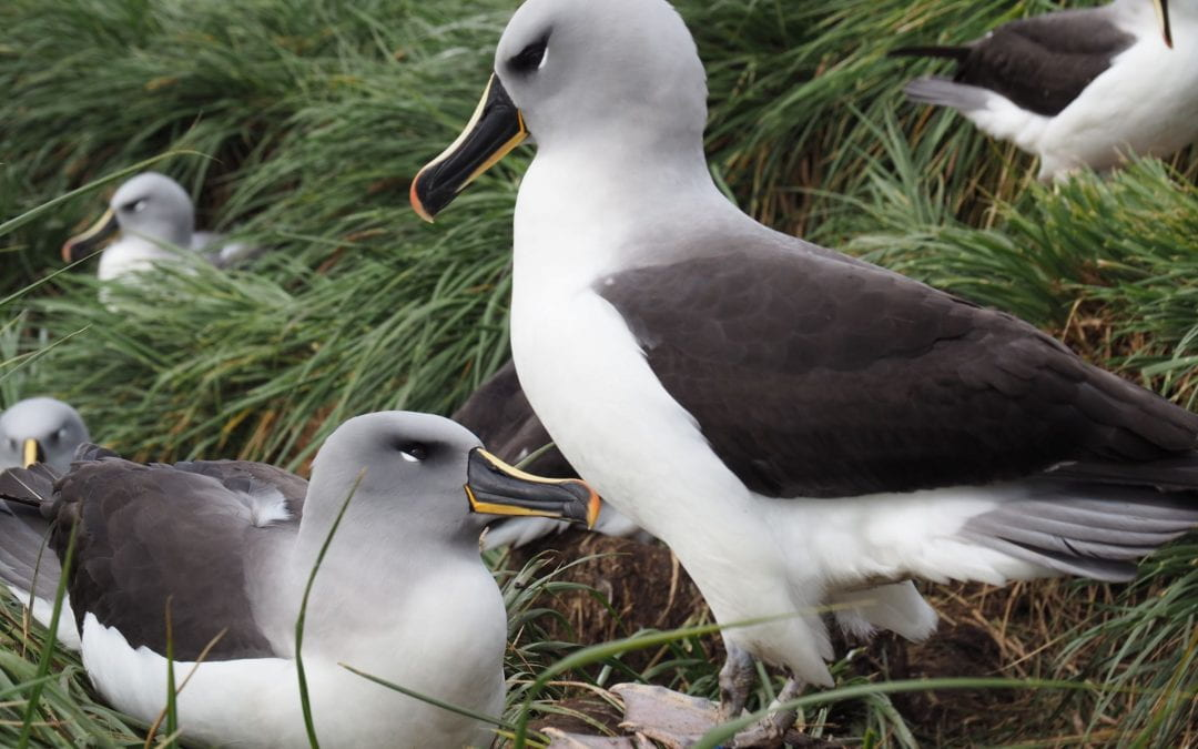 A deep dive into movement data from Southern Ocean albatross