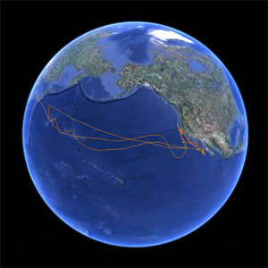Migration track of a tagged Pacific bluefin tuna