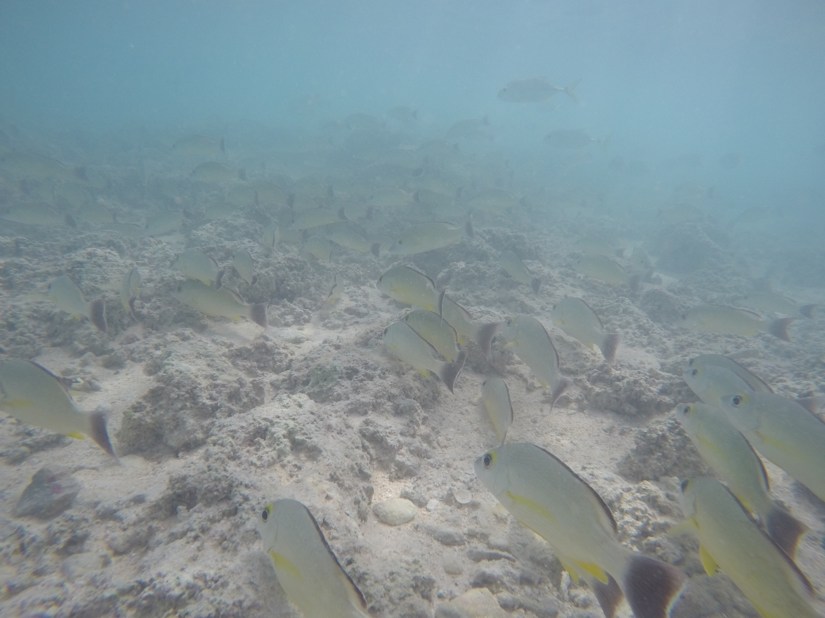 Taking a dip in the shallow shores on the island of Nikumaroro, we joined many schools of fish who were less than bothered by our presence.
