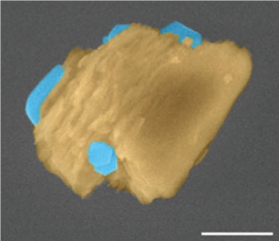 Figure 1. Ice nucleation on an individual kaolinite particle at 205 K. Kaolinite is a clay mineral that serves as a surrogate of atmospheric mineral dust. Hexagonal ice crystals are false colored in blue and the Kaolinite mineral in brown. Scale bar represents 5 μm.