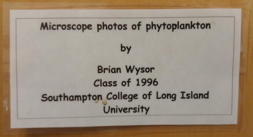 Brian Wysor, 1996 LIU Phytoplankton