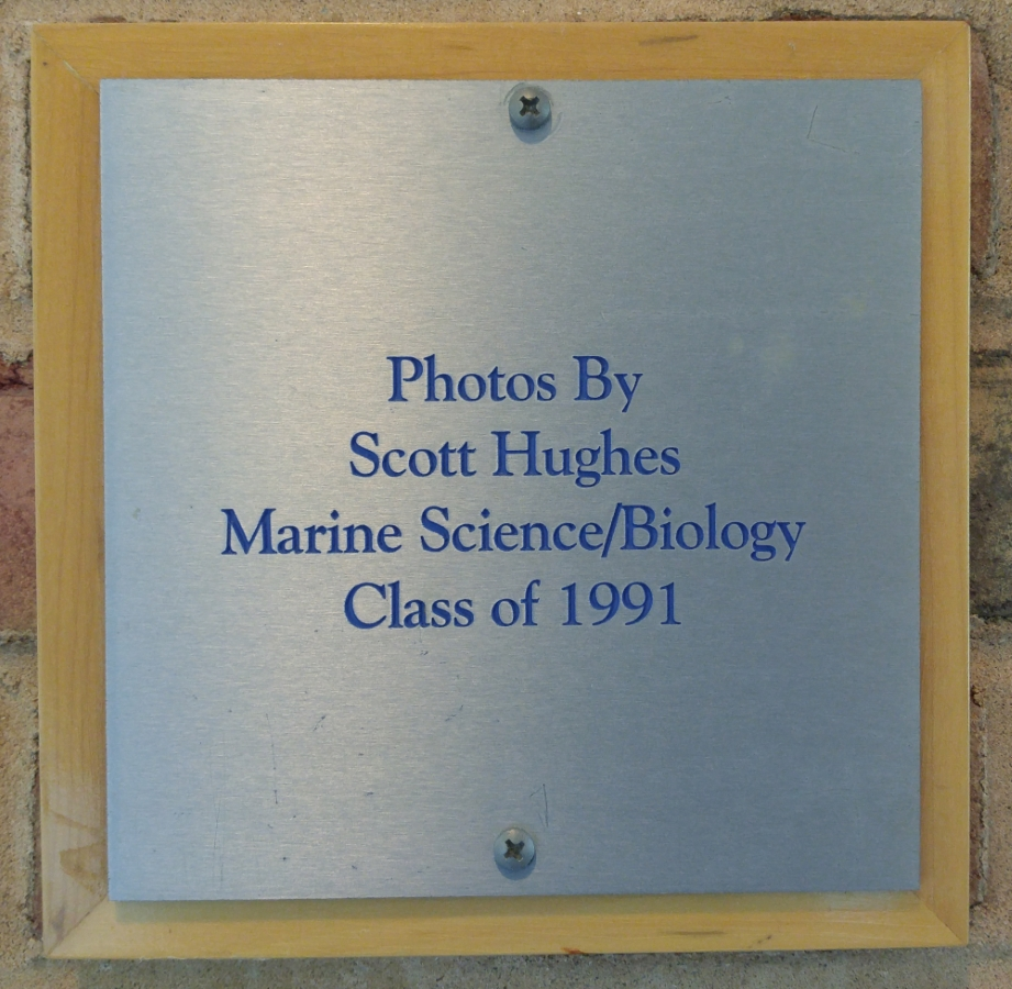 Scott Hughes, 1991 LIU Marine Sciences / Biology