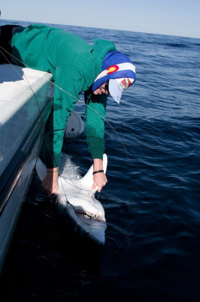 Lisa Crawford hold a shark close to the boat.