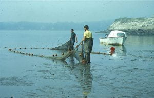 The Long River Beach Seine survey, begun in 1974, is among many unique scientific samplings represented in the Hudson River Collection.