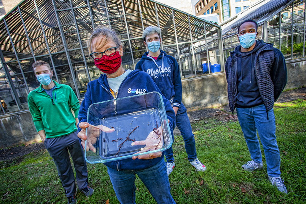 Students Collaborate on Study of Earthworms and Herbicides