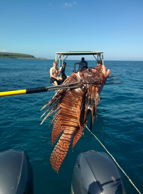 The killed lionfish.