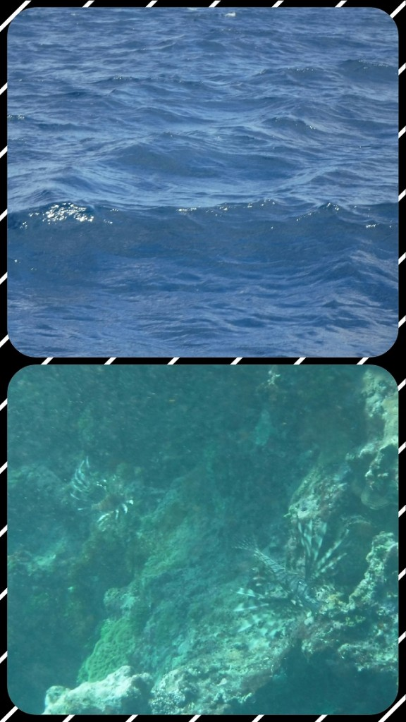 "The lovely picture of water that I got instead of the sea turtle. Joe, Gabriel, and Scarlet are my witnesses who saw the ""imaginary"" sea turtle too. Sorry to disappoint so there's a picture of the two lionfish."
