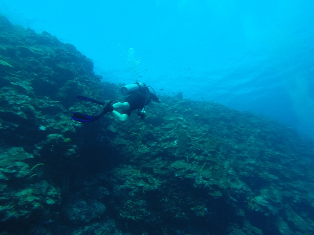 Here I am diving the Rio Bueno site this morning. The reef face was spectacular.