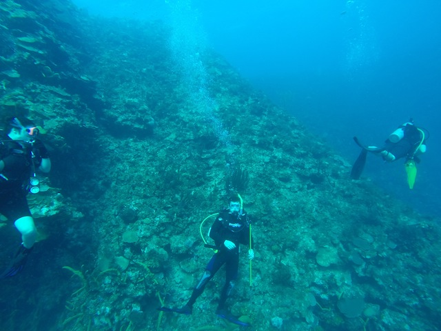 Will diving at Rio Bueno this morning trying to spear some lionfish.