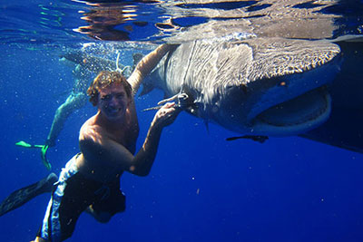 Former MCP Student Uses Internship to Kickstart Career in Shark Research