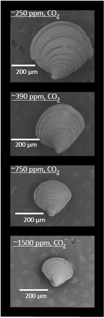 oa-clams