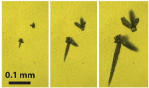 Ice formation initiated by sea spray aerosol particles as observed using the ice nucleation apparatus coupled to optical microscopy. The ice crystals grow (panels left to right) as relative humidity is increased.